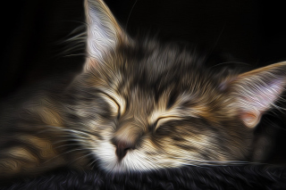 Sleepy Cat Art Background for Android, iPhone and iPad