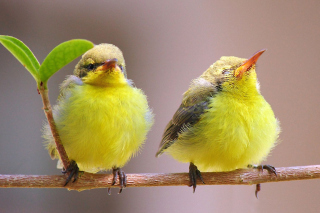 Yellow Small Birds Background for Android, iPhone and iPad
