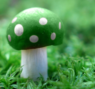 Green Mushroom - Obrázkek zdarma pro 320x320