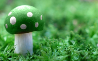 Green Mushroom - Obrázkek zdarma pro Fullscreen Desktop 1024x768