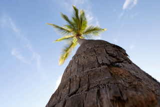 Palm Tree Wallpaper for Android, iPhone and iPad