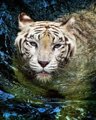Big Tiger - Obrázkek zdarma pro Nokia Asha 309