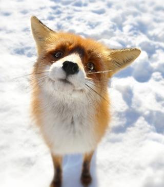 Foxy - Obrázkek zdarma pro Nokia Asha 503