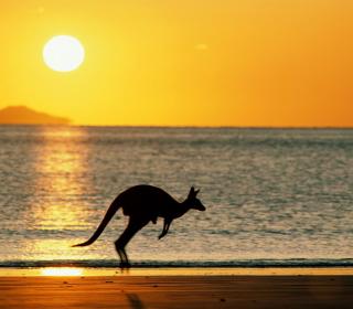 Australian Kangaroo - Obrázkek zdarma pro 320x320