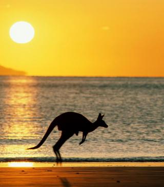 Australian Kangaroo - Obrázkek zdarma pro 240x320