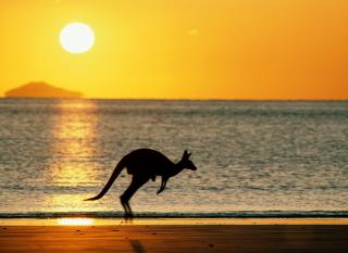 Australian Kangaroo - Obrázkek zdarma pro 176x144