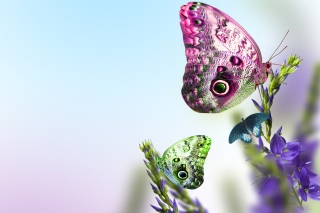 Tender Butterfly HD - Obrázkek zdarma pro Samsung Galaxy Tab 2 10.1
