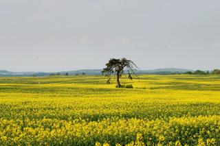 Yellow Meadow Landscape - Obrázkek zdarma pro Android 320x480