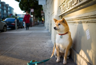 Dog On Street Background for Android, iPhone and iPad