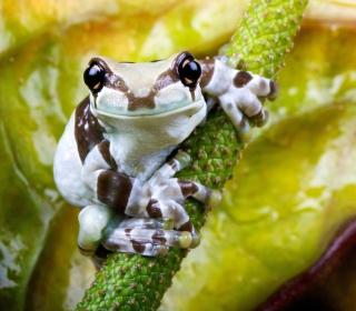 Cute Small Frog - Obrázkek zdarma pro 1024x1024