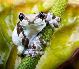 Cute Small Frog - Obrázkek zdarma pro iPad mini 2