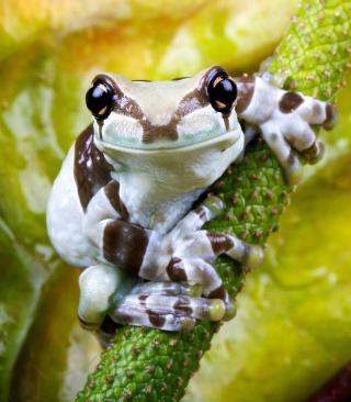 Cute Small Frog - Obrázkek zdarma pro iPhone 6