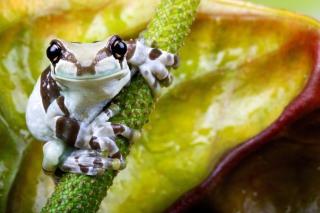 Cute Small Frog - Obrázkek zdarma pro 1600x900