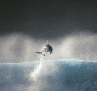 Dolphin Jumping In Water - Obrázkek zdarma pro 208x208