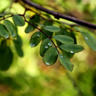 Macro Green Leaves - Obrázkek zdarma pro 128x128