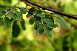 Macro Green Leaves - Obrázkek zdarma pro 720x320