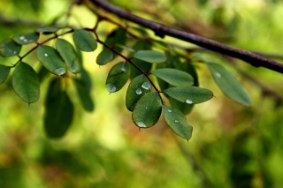 Macro Green Leaves - Obrázkek zdarma pro Samsung Galaxy S5