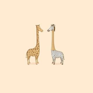 Giraffe-Zebra - Obrázkek zdarma pro 208x208
