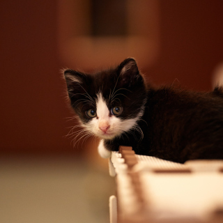 My favorite kitty - Obrázkek zdarma pro 1024x1024