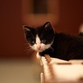 My favorite kitty - Obrázkek zdarma pro iPad mini