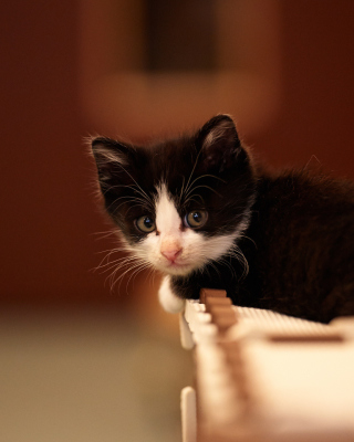 My favorite kitty - Obrázkek zdarma pro iPhone 5C