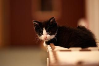 My favorite kitty - Obrázkek zdarma pro 480x360