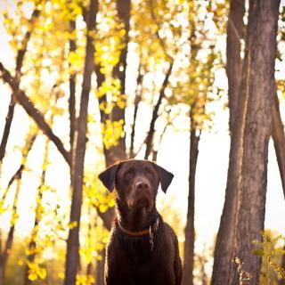 Dog in Autumn Garden - Obrázkek zdarma pro 320x320