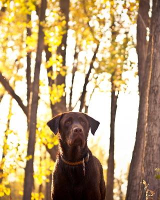 Dog in Autumn Garden - Obrázkek zdarma pro 360x480