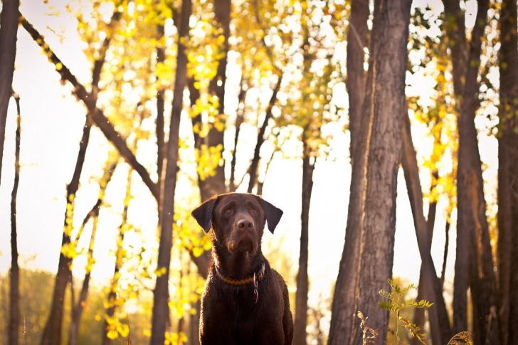 Dog in Autumn Garden wallpaper