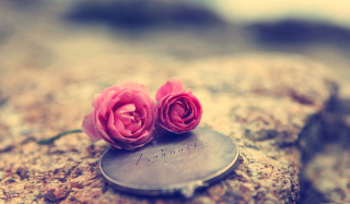 Free Miniature Roses Picture for Android, iPhone and iPad
