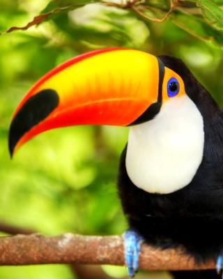 Toucan Bird - Obrázkek zdarma pro 768x1280