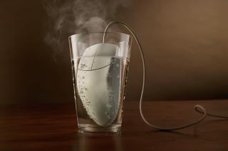Hot Mouse - Obrázkek zdarma pro 1200x1024