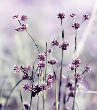 Wild Flowers - Obrázkek zdarma pro iPad Air