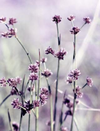 Wild Flowers - Obrázkek zdarma pro Nokia Asha 502