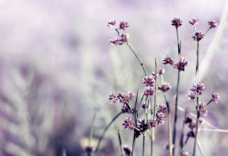 Wild Flowers - Obrázkek zdarma pro 640x480
