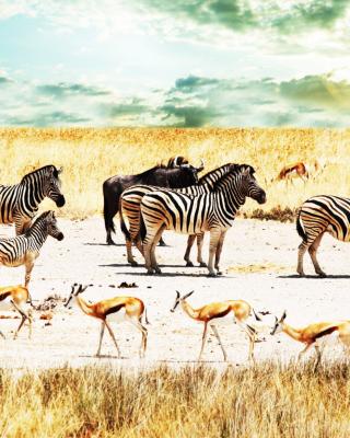 Wild Life Zebras - Obrázkek zdarma pro Nokia X3