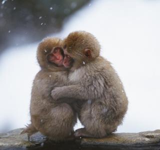 Monkey Love - Obrázkek zdarma pro 128x128