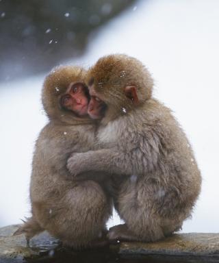 Monkey Love - Obrázkek zdarma pro 176x220
