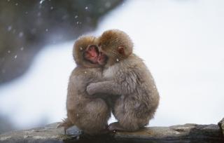 Monkey Love - Obrázkek zdarma pro LG P700 Optimus L7