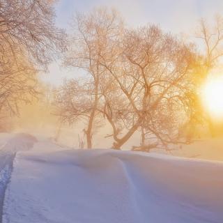 Morning in winter forest - Obrázkek zdarma pro iPad Air
