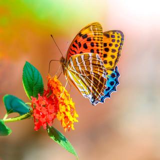 Colorful Animated Butterfly - Obrázkek zdarma pro 128x128