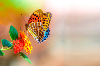 Colorful Animated Butterfly - Obrázkek zdarma pro Widescreen Desktop PC 1280x800