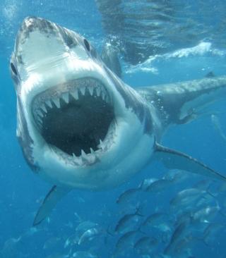 White Shark - Obrázkek zdarma pro Nokia 5800 XpressMusic