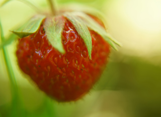Free Strawberry Macro Picture for Android, iPhone and iPad