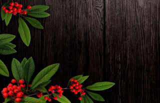Autumn Berry Wallpaper for Android, iPhone and iPad