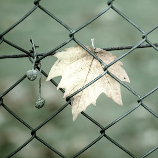 Macro leaf photo - Obrázkek zdarma pro 2048x2048