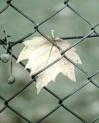 Macro leaf photo - Obrázkek zdarma pro 132x176