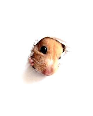 Hamster In Hole On Your Screen - Obrázkek zdarma pro 480x854