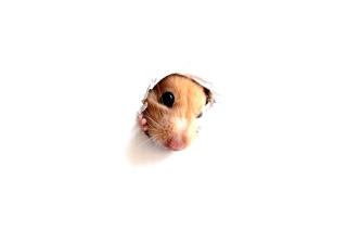 Hamster In Hole On Your Screen - Obrázkek zdarma pro Samsung Galaxy Ace 4