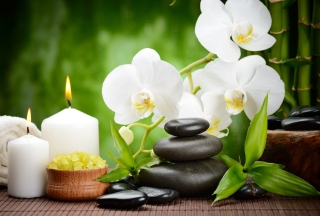 Spa Orchid Wallpaper for Android, iPhone and iPad
